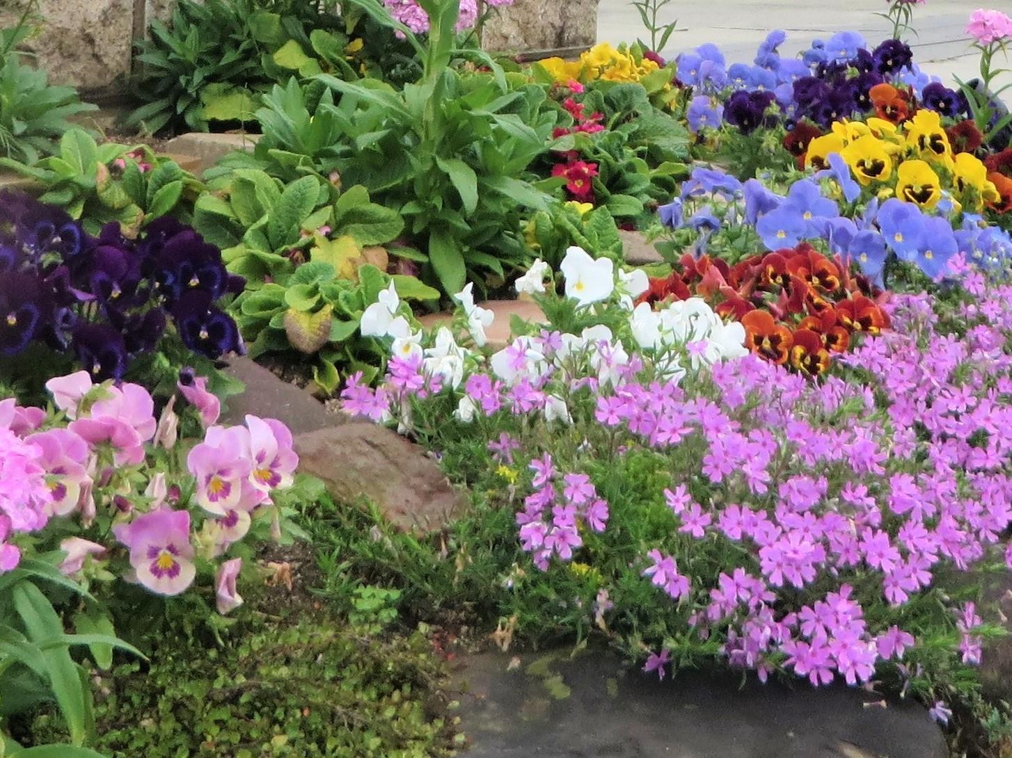 花のある庭、基本の基本 花のある庭に欠かせない草花。草花類は成長も早く花期も長いので、手軽に庭に彩をプラスしてくれます。苗の種類も豊富に出回っているので、種まきから育てるタイミングを逃しても、手軽に植栽できます。