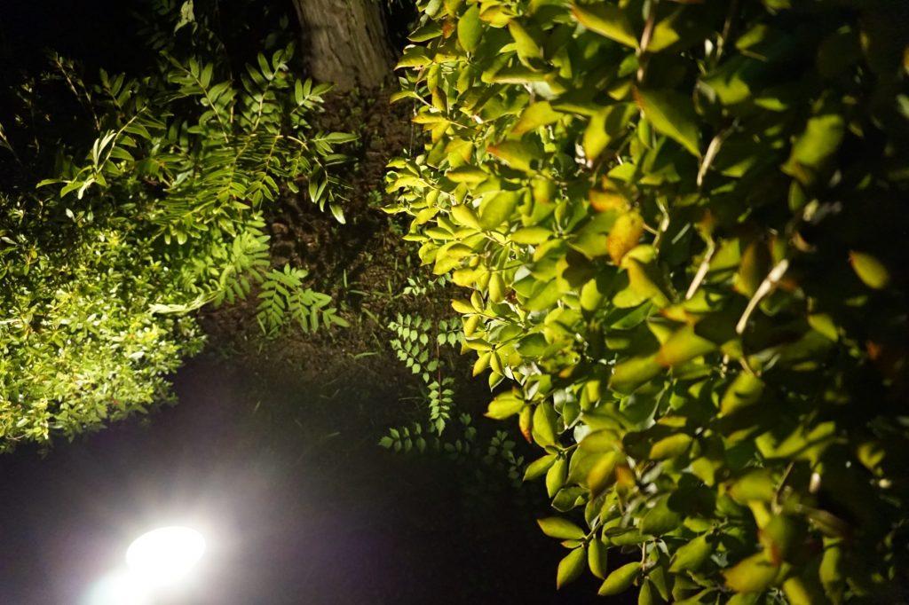 Garden & Exterior 特集:ソーラーって大丈夫? よくわかるガーデンライト